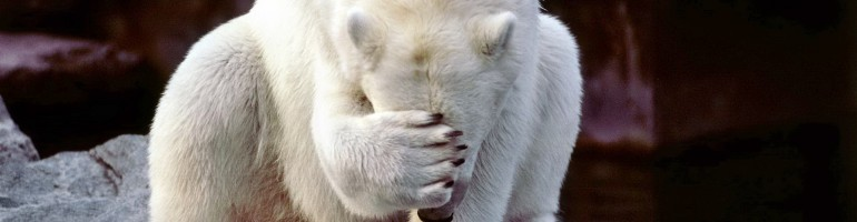 cropped-embarrassed_polar_bear_w1.jpeg